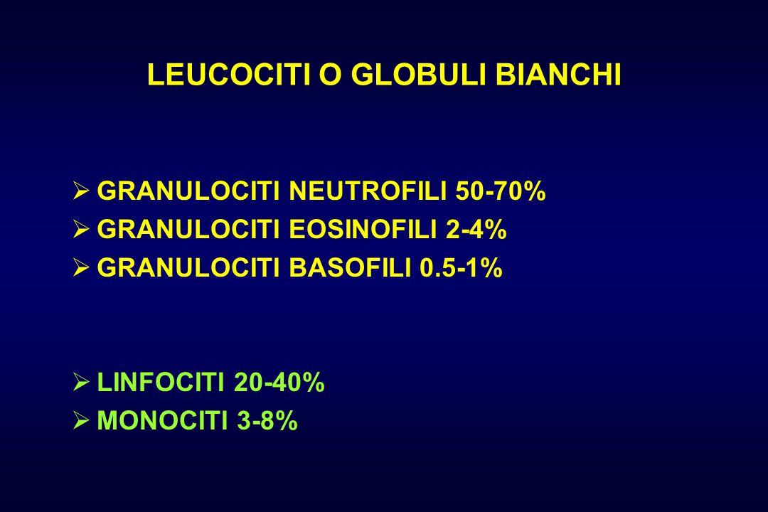 LEUCOCITI O GLOBULI BIANCHI  GRANULOCITI NEUTROFILI 50-70%  GRANULOCITI EOSINOFILI 2-4%  GRANULOCITI BASOFILI 0.5-1%  LINFOCITI 20-40%  MONOCITI 3-8%
