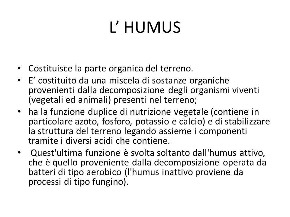 L' HUMUS Costituisce la parte organica del terreno. E' costituito da una miscela di sostanze organiche provenienti dalla decomposizione degli organism