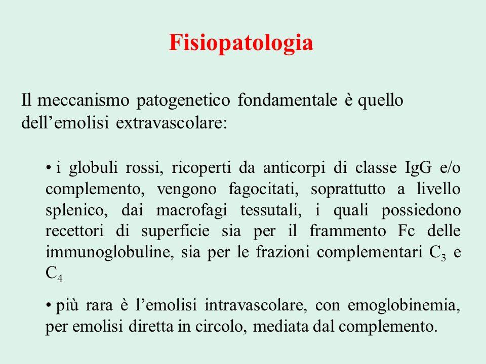 Fisiopatologia Il meccanismo patogenetico fondamentale è quello dell'emolisi extravascolare: i globuli rossi, ricoperti da anticorpi di classe IgG e/o