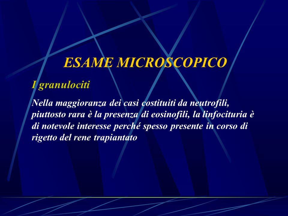 ESAME MICROSCOPICO I granulociti Nella maggioranza dei casi costituiti da neutrofili, piuttosto rara è la presenza di eosinofili, la linfocituria è di