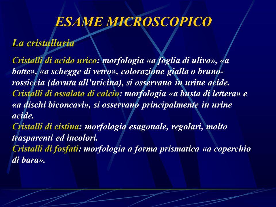 ESAME MICROSCOPICO La cristalluria Cristalli di acido urico: morfologia «a foglia di ulivo», «a botte», «a schegge di vetro», colorazione gialla o bru