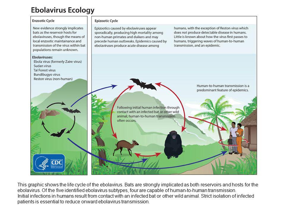 Where does Ebola hide.
