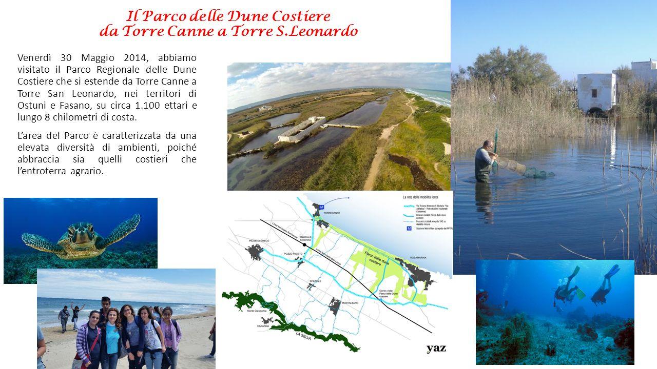 Il Parco delle Dune Costiere da Torre Canne a Torre S.Leonardo Nel parco insiste anche il SIC (Sito D'Importanza Comunitaria) «Litorale Brindisino» (individuato con il codice IT9140002).