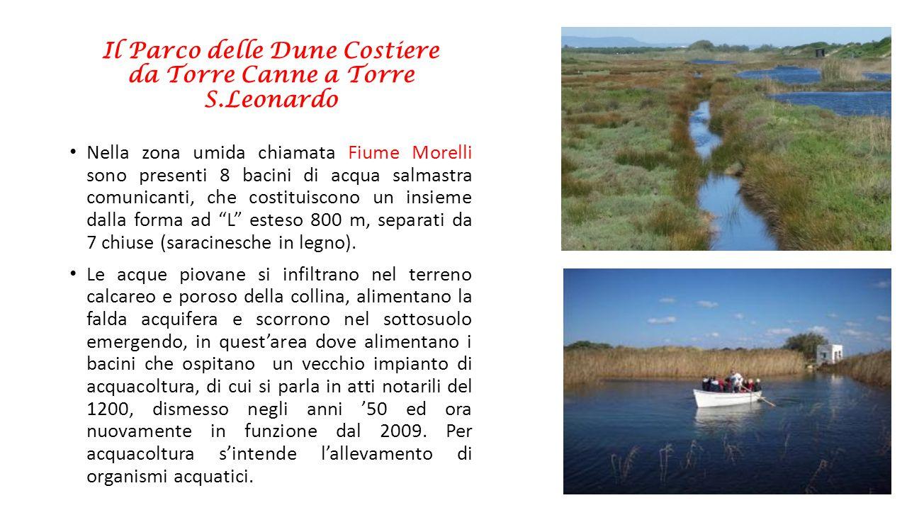 Il Parco delle Dune Costiere da Torre Canne a Torre S.Leonardo Nella zona umida chiamata Fiume Morelli sono presenti 8 bacini di acqua salmastra comun