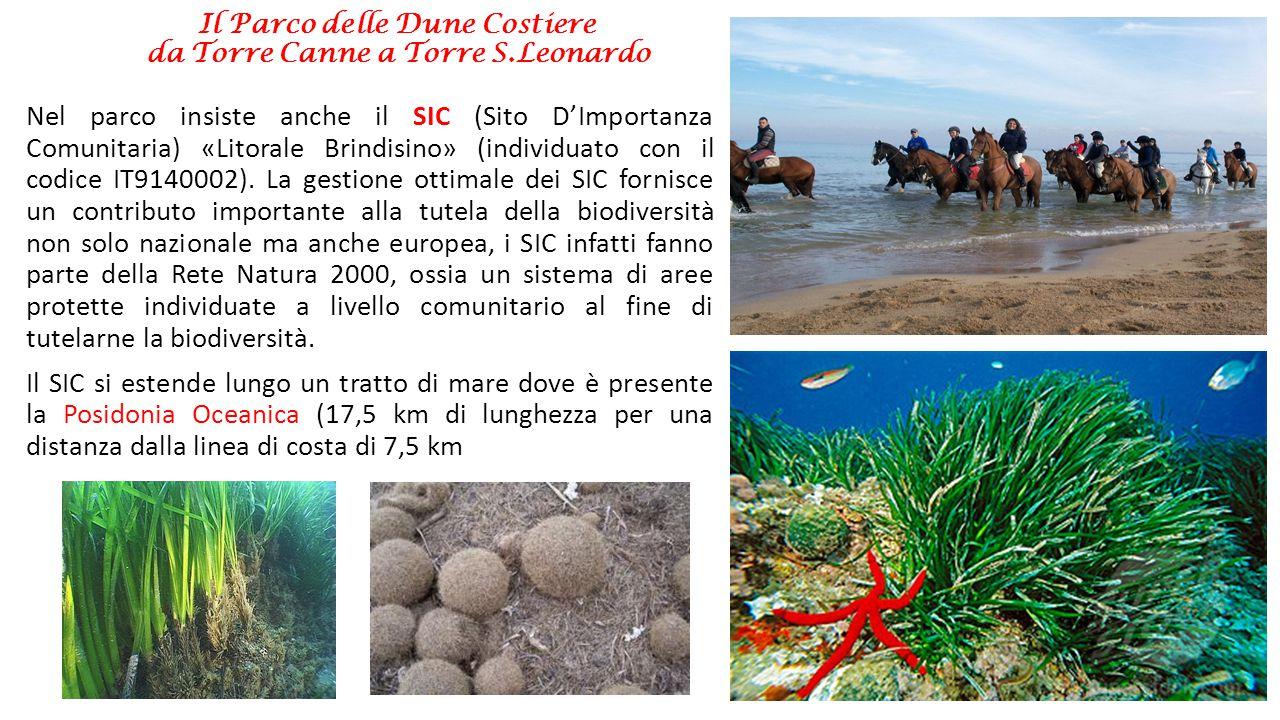 Il Parco delle Dune Costiere da Torre Canne a Torre S.Leonardo Il SIC interessa poi un imponente sistema dunare caratterizzato da macchia mediterranea a ginepri tra i meglio conservati in termini di struttura e biodiversità lungo il litorale adriatico.
