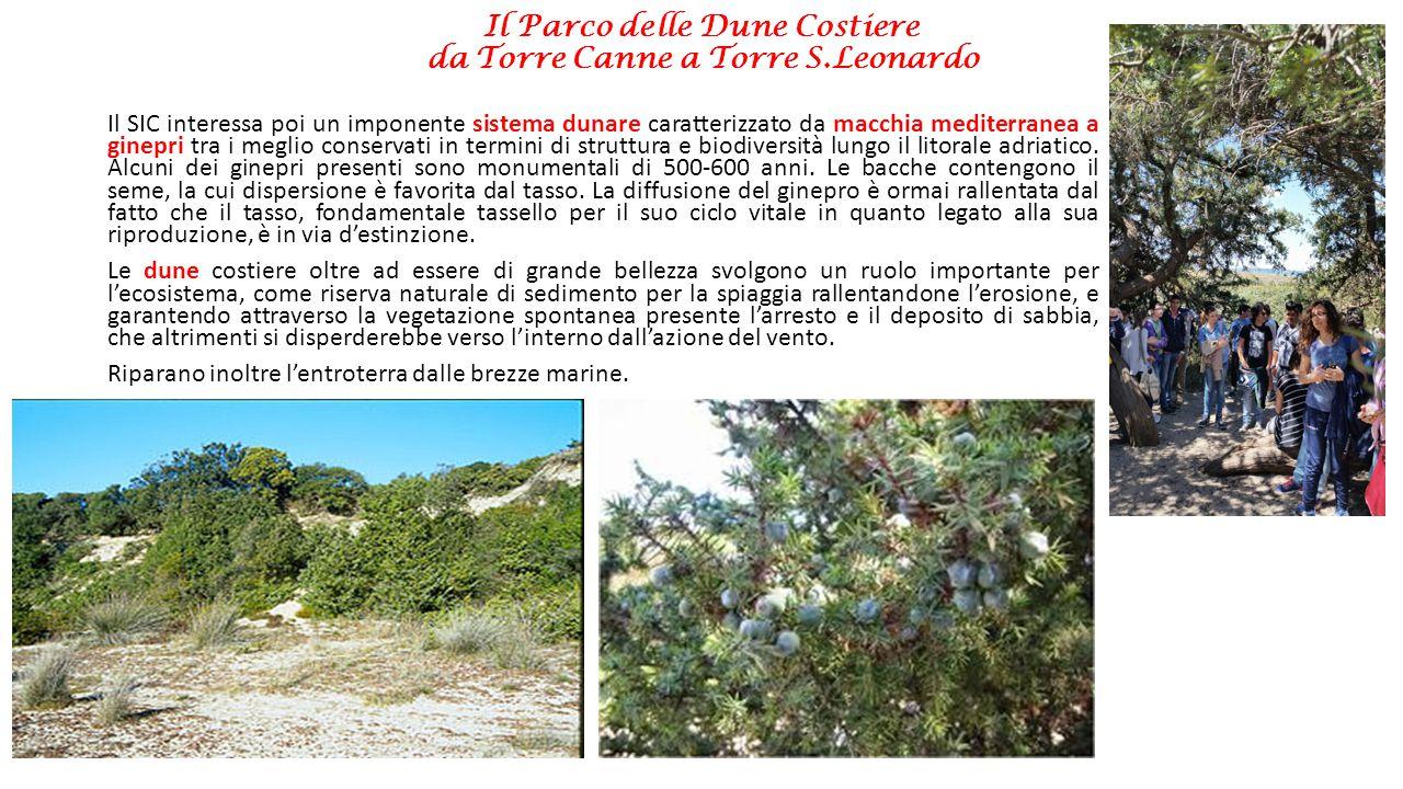 Il Parco delle Dune Costiere da Torre Canne a Torre S.Leonardo Il SIC interessa poi un imponente sistema dunare caratterizzato da macchia mediterranea