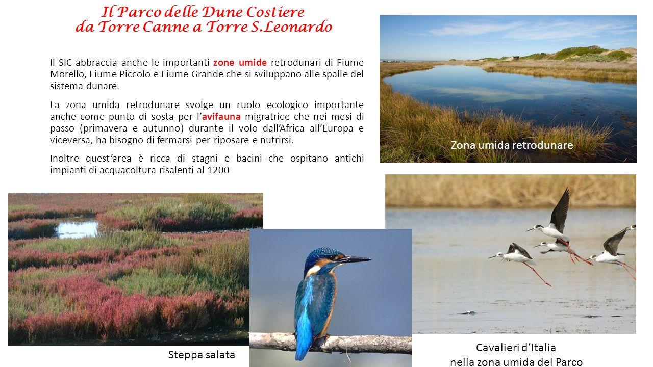 Il Parco delle Dune Costiere da Torre Canne a Torre S.Leonardo Il SIC abbraccia anche le importanti zone umide retrodunari di Fiume Morello, Fiume Pic