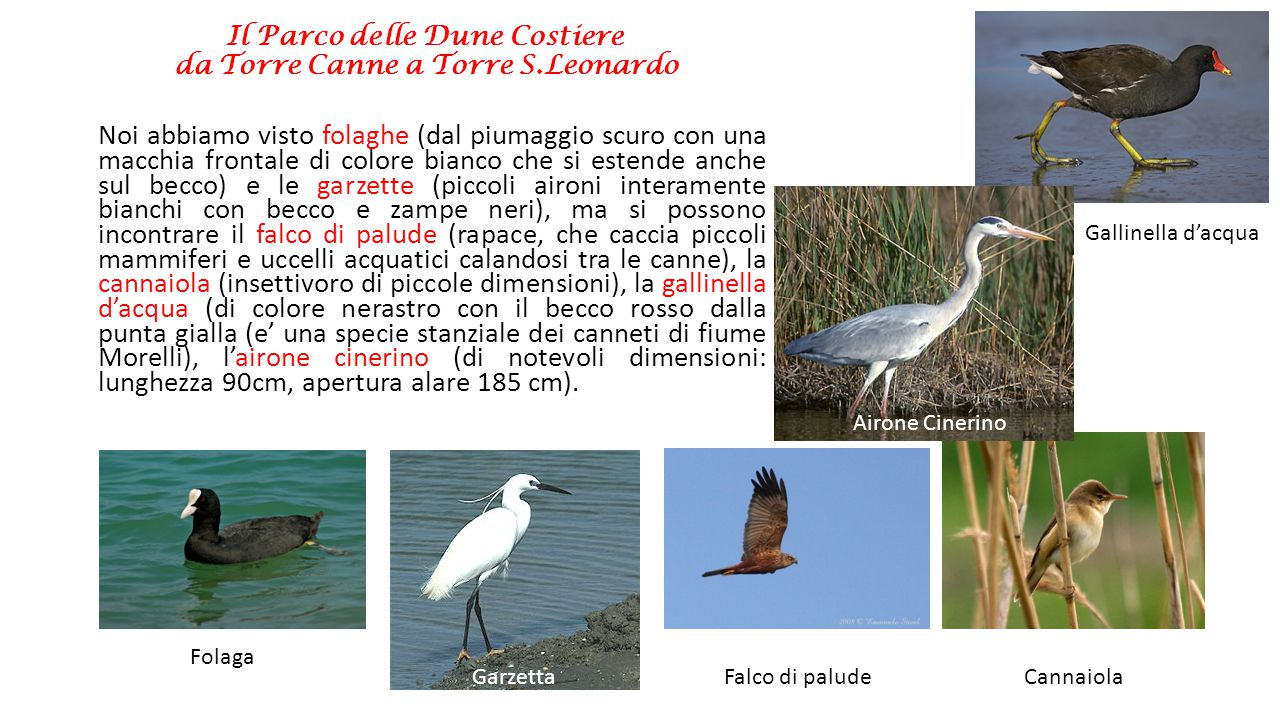 Il Parco delle Dune Costiere da Torre Canne a Torre S.Leonardo Il SIC si estende quindi nell'entroterra oltre la S.S.