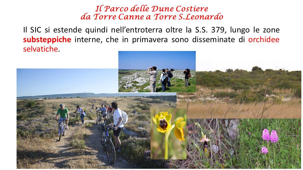 Il Parco delle Dune Costiere da Torre Canne a Torre S.Leonardo Tantissimi gli habitat di interesse conservazionistico, presenti negli elenchi della Direttiva Habitat perché sono da tutelare, tra questi: -le praterie di Posidonia (habitat prioritario) -le lagune costiere (habitat prioritario) -I pascoli inondati mediterranei -Le steppe salate mediterranee (habitat prioritario) -Le dune mobili con presenza di Ammophila arenaria -Dune con ginepri (habitat prioritario) -Dune con sclerofille (macchia mediterranea) -Percorsi substeppici di graminacee e piante annue dei TheroBrachypodietea (pseudosteppa, habitat prioritario) -Pareti rocciose con vegetazione casmofitica La zona
