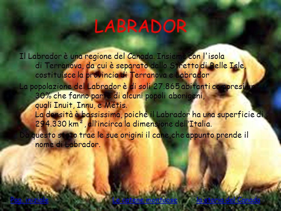 LABRADOR Il Labrador è una regione del Canada. Insieme con l'isola di Terranova, da cui è separato dallo Stretto di Belle Isle, costituisce la provinc