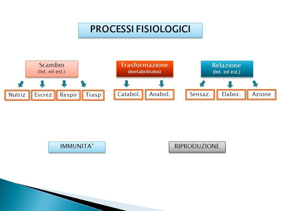 PROCESSI FISIOLOGICI Trasformazione (metabolismo) Catabol.Anabol. Relazione (Int. ed est.) Sensaz.Elabor. Scambio (Int. ed est.) Scambio (Int. ed est.