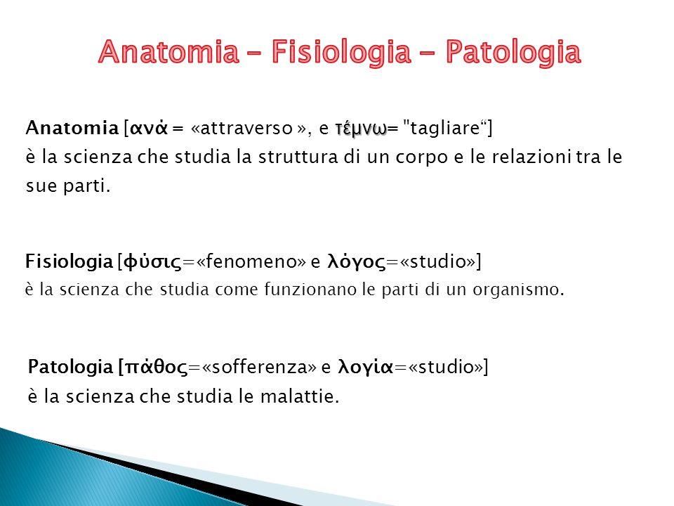 A.MACROSCOPICA ( Antropotomia ) A.