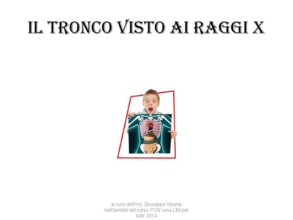 Il tronco visto ai raggi x a cura dell'ins. Giuseppe Vaiana nell'ambito del corso PON 'una LIM per tutti' 2014