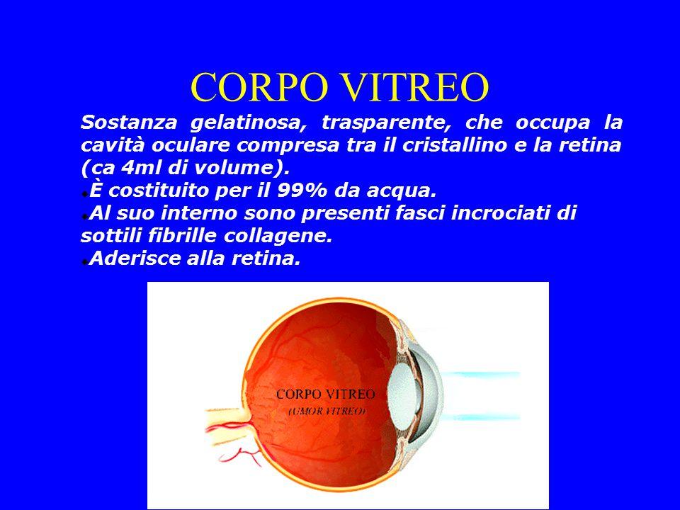Sostanza gelatinosa, trasparente, che occupa la cavità oculare compresa tra il cristallino e la retina (ca 4ml di volume).  È costituito per il 99% d