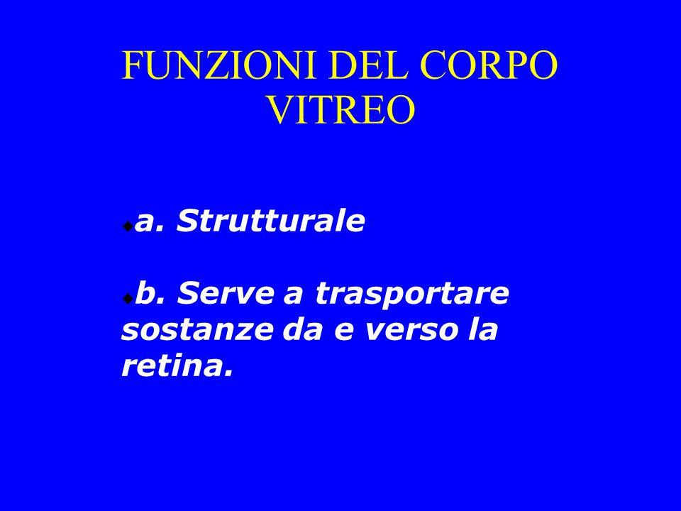  a. Strutturale  b. Serve a trasportare sostanze da e verso la retina. FUNZIONI DEL CORPO VITREO