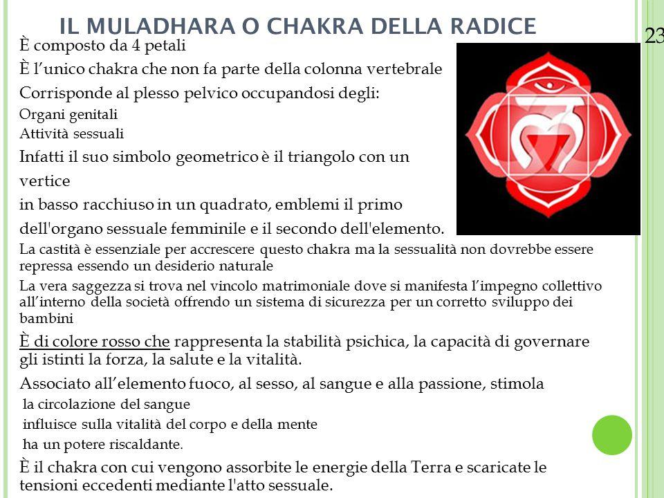 23/08/12 IL MULADHARA O CHAKRA DELLA RADICE È composto da 4 petali È l'unico chakra che non fa parte della colonna vertebrale Corrisponde al plesso pe