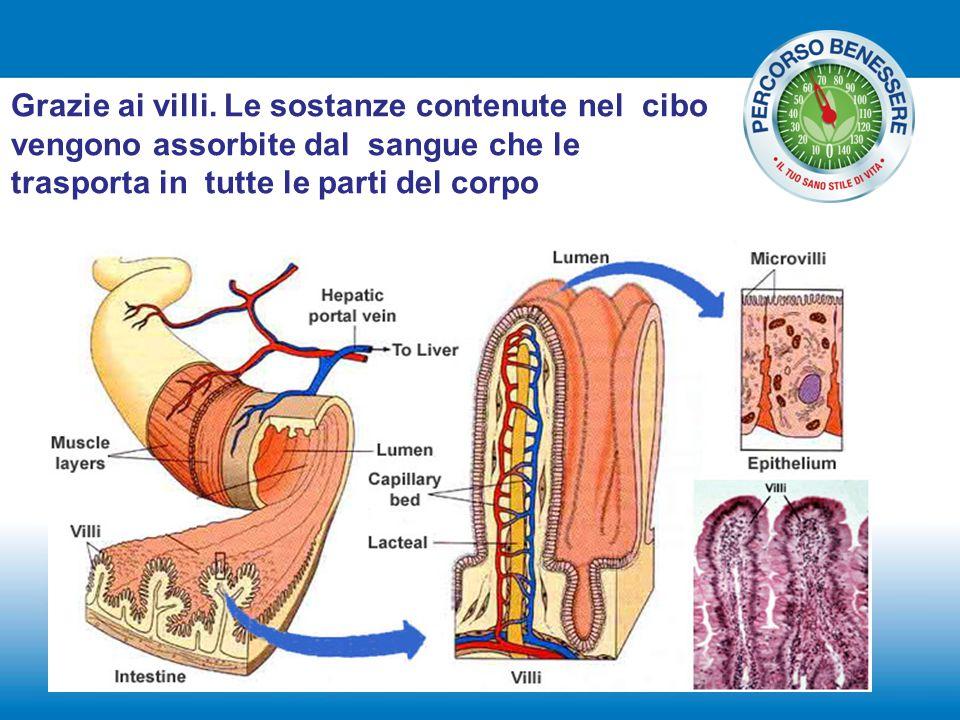 Grazie ai villi. Le sostanze contenute nel cibo vengono assorbite dal sangue che le trasporta in tutte le parti del corpo
