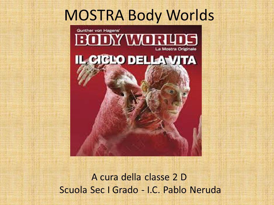 A cura della classe 2 D Scuola Sec I Grado - I.C. Pablo Neruda MOSTRA Body Worlds