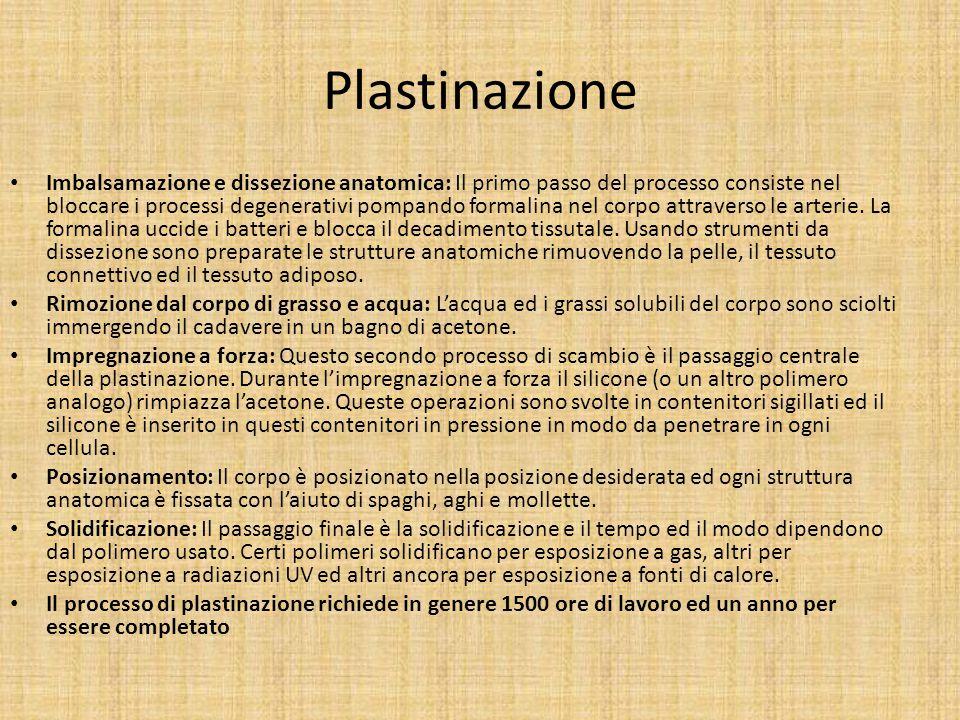 Plastinazione Imbalsamazione e dissezione anatomica: Il primo passo del processo consiste nel bloccare i processi degenerativi pompando formalina nel