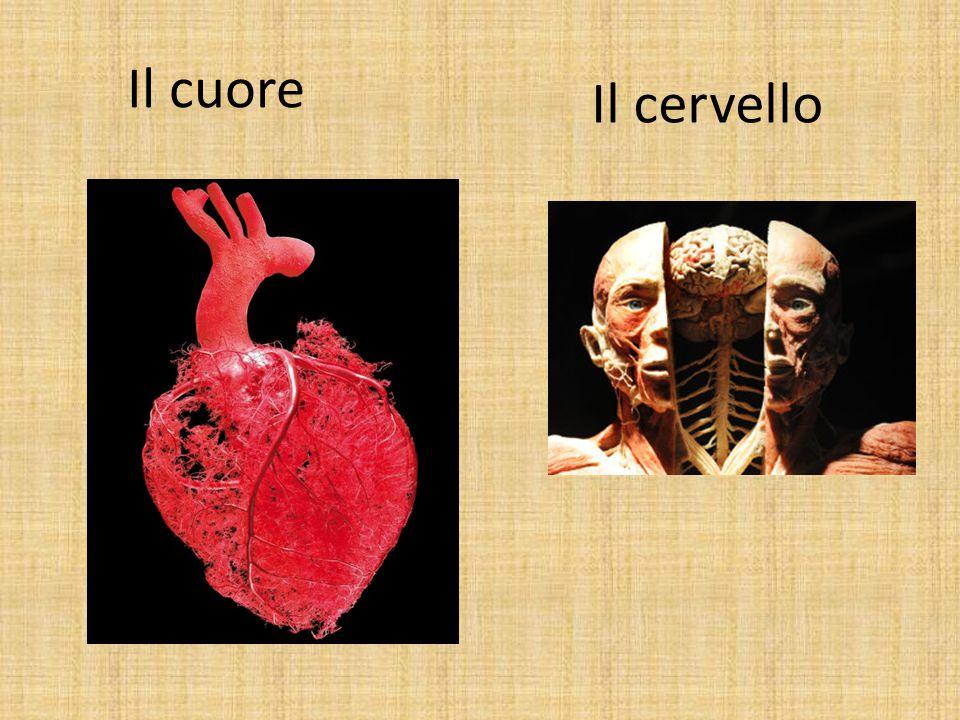 Il cuore Il cervello