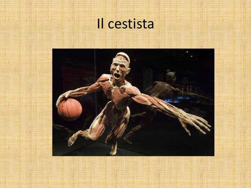 Il cestista