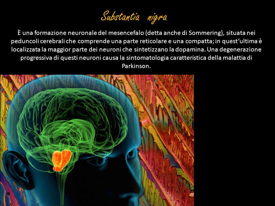 Substantia nigra È una formazione neuronale del mesencefalo (detta anche di Sommering), situata nei peduncoli cerebrali che comprende una parte retico