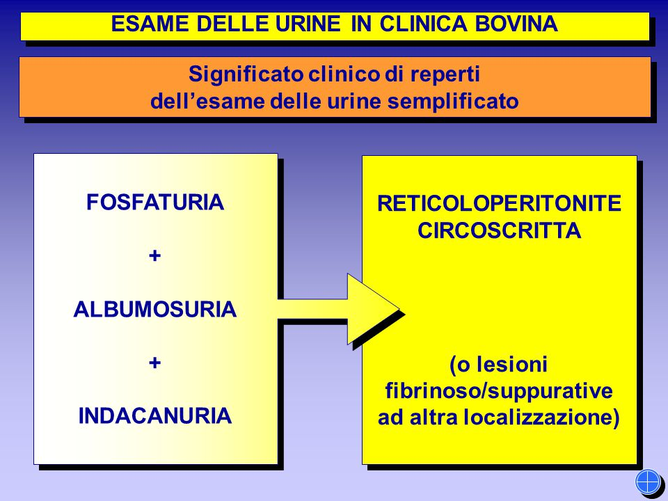 RETICOLOPERITONITE CIRCOSCRITTA (o lesioni fibrinoso/suppurative ad altra localizzazione) RETICOLOPERITONITE CIRCOSCRITTA (o lesioni fibrinoso/suppura