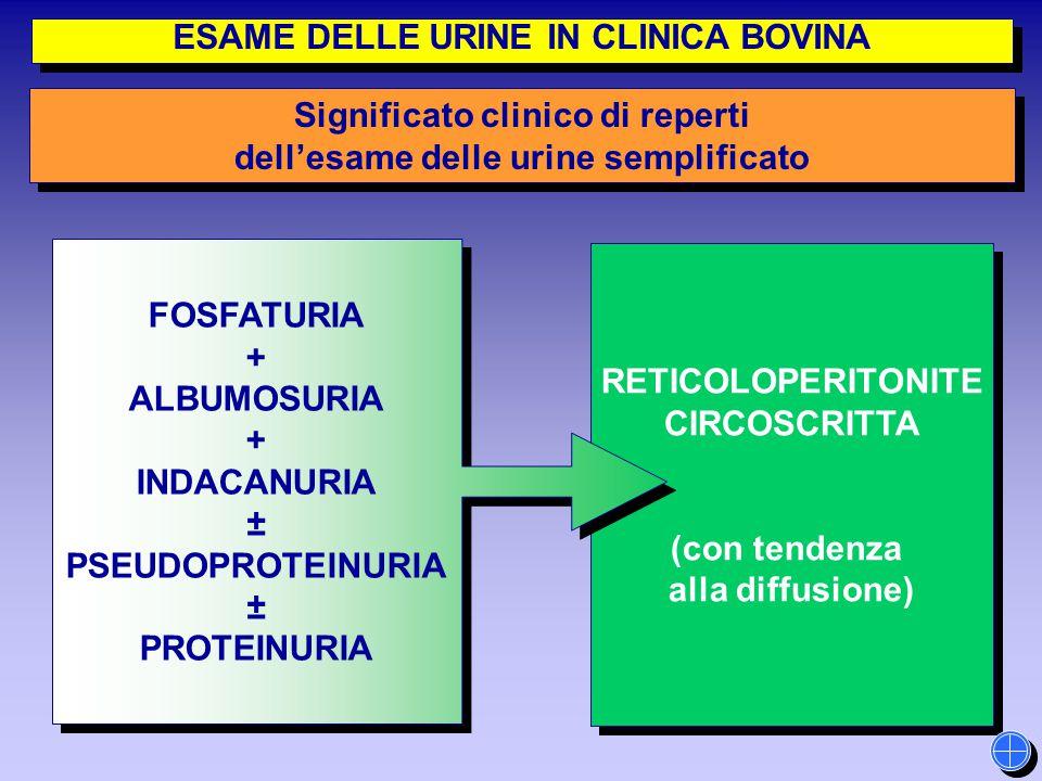 RETICOLOPERITONITE CIRCOSCRITTA (con tendenza alla diffusione) RETICOLOPERITONITE CIRCOSCRITTA (con tendenza alla diffusione) FOSFATURIA + ALBUMOSURIA