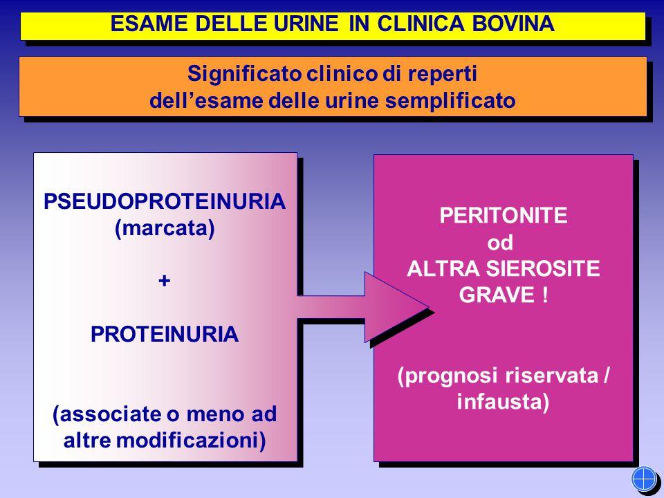 PERITONITE od ALTRA SIEROSITE GRAVE ! (prognosi riservata / infausta) PERITONITE od ALTRA SIEROSITE GRAVE ! (prognosi riservata / infausta) PSEUDOPROT