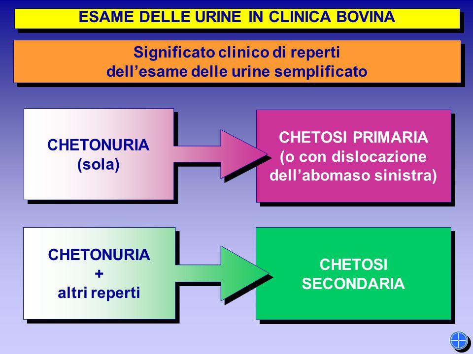 CHETOSI SECONDARIA CHETOSI SECONDARIA CHETOSI PRIMARIA (o con dislocazione dell'abomaso sinistra) CHETOSI PRIMARIA (o con dislocazione dell'abomaso si