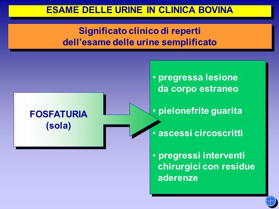 pregressa lesione da corpo estraneo pielonefrite guarita ascessi circoscritti pregressi interventi chirurgici con residue aderenze pregressa lesione d