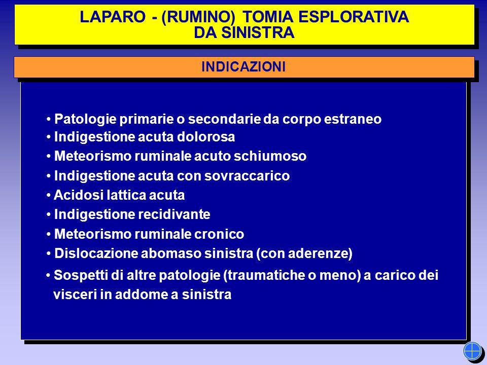LAPARO - (RUMINO) TOMIA ESPLORATIVA DA SINISTRA LAPARO - (RUMINO) TOMIA ESPLORATIVA DA SINISTRA INDICAZIONI Patologie primarie o secondarie da corpo e