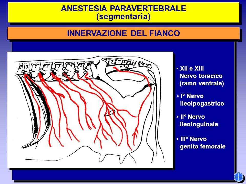 ANESTESIA PARAVERTEBRALE (segmentaria) ANESTESIA PARAVERTEBRALE (segmentaria) INNERVAZIONE DEL FIANCO XII e XIII Nervo toracico (ramo ventrale) I° Ner