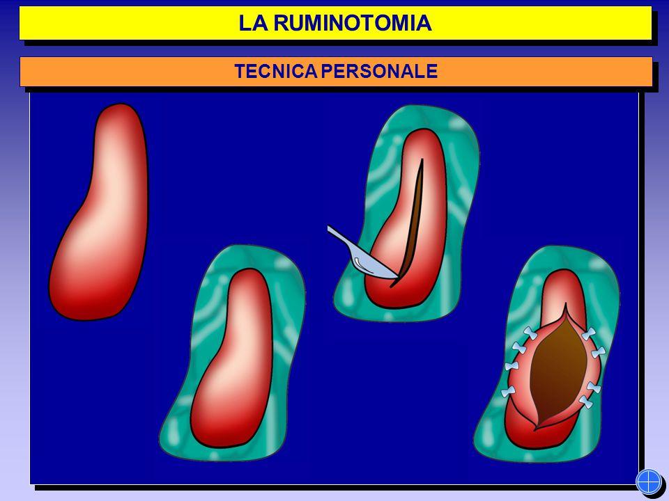 LA RUMINOTOMIA TECNICA PERSONALE