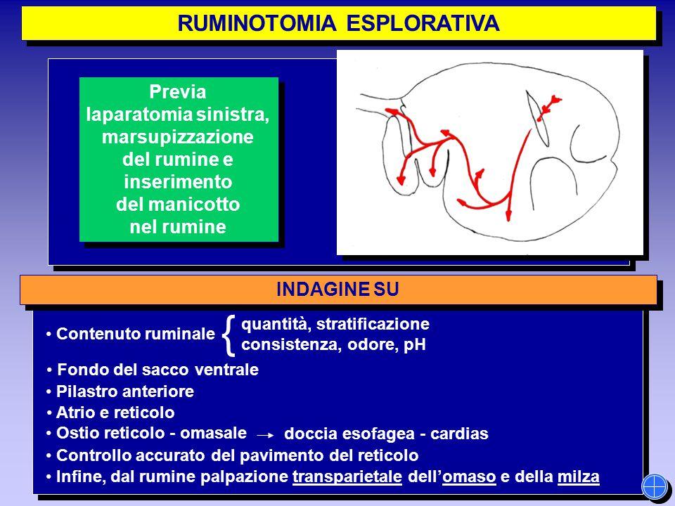 RUMINOTOMIA ESPLORATIVA INDAGINE SU Controllo accurato del pavimento del reticolo quantità, stratificazione consistenza, odore, pH { Contenuto ruminal
