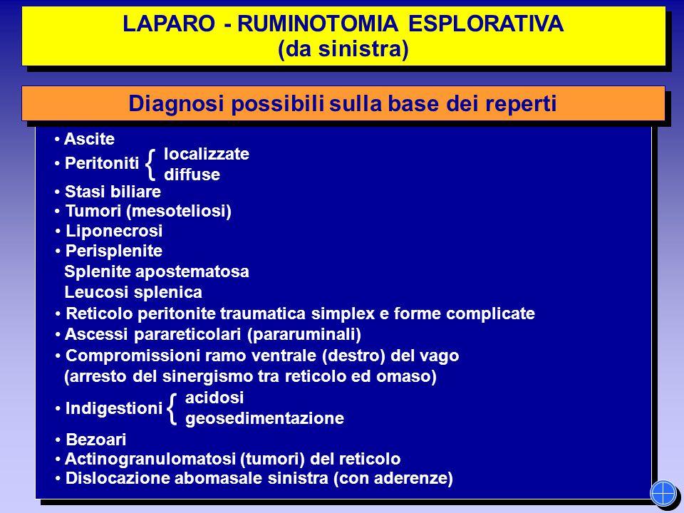 LAPARO - RUMINOTOMIA ESPLORATIVA (da sinistra) LAPARO - RUMINOTOMIA ESPLORATIVA (da sinistra) localizzate diffuse { acidosi geosedimentazione Diagnosi