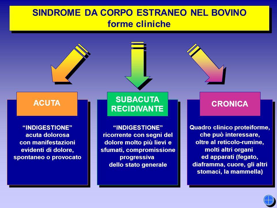 """SINDROME DA CORPO ESTRANEO NEL BOVINO forme cliniche SINDROME DA CORPO ESTRANEO NEL BOVINO forme cliniche """"INDIGESTIONE"""" acuta dolorosa con manifestaz"""