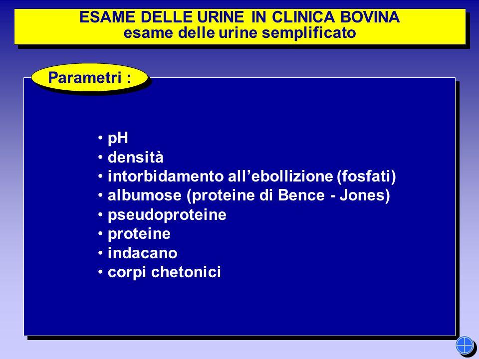 ESAME DELLE URINE IN CLINICA BOVINA esame delle urine semplificato ESAME DELLE URINE IN CLINICA BOVINA esame delle urine semplificato pH densità intor