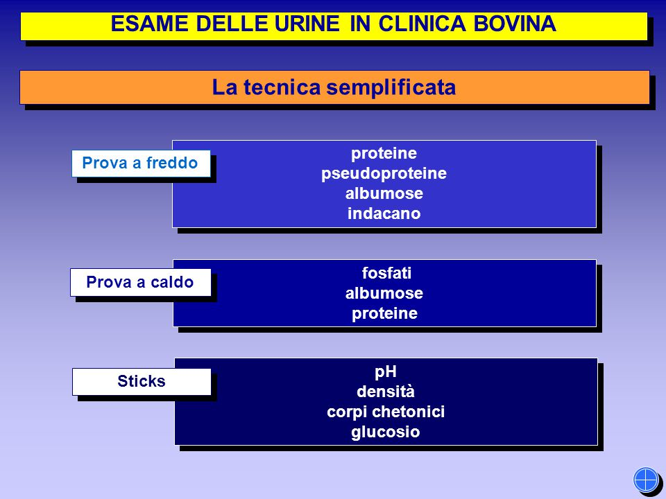 ESAME DELLE URINE IN CLINICA BOVINA La tecnica semplificata proteine pseudoproteine albumose indacano proteine pseudoproteine albumose indacano fosfat