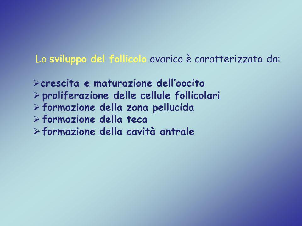Lo sviluppo del follicolo ovarico è caratterizzato da:  crescita e maturazione dell'oocita  proliferazione delle cellule follicolari  formazione de