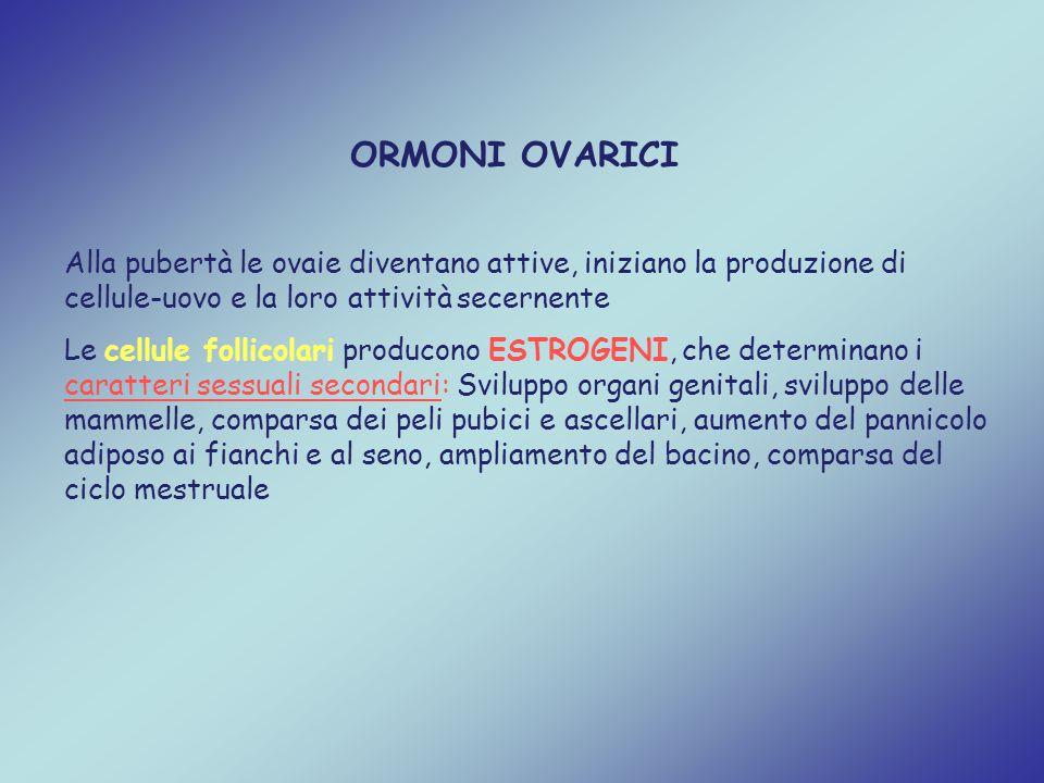 ORMONI OVARICI Alla pubertà le ovaie diventano attive, iniziano la produzione di cellule-uovo e la loro attività secernente Le cellule follicolari pro