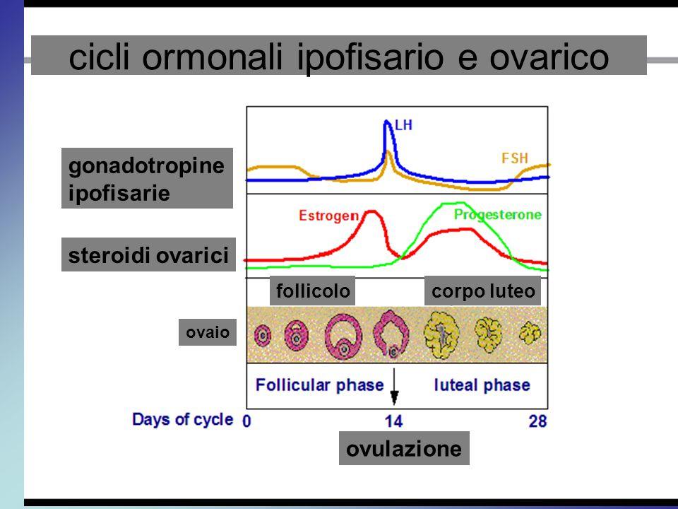 gonadotropine ipofisarie steroidi ovarici ovaio follicolocorpo luteo ovulazione cicli ormonali ipofisario e ovarico