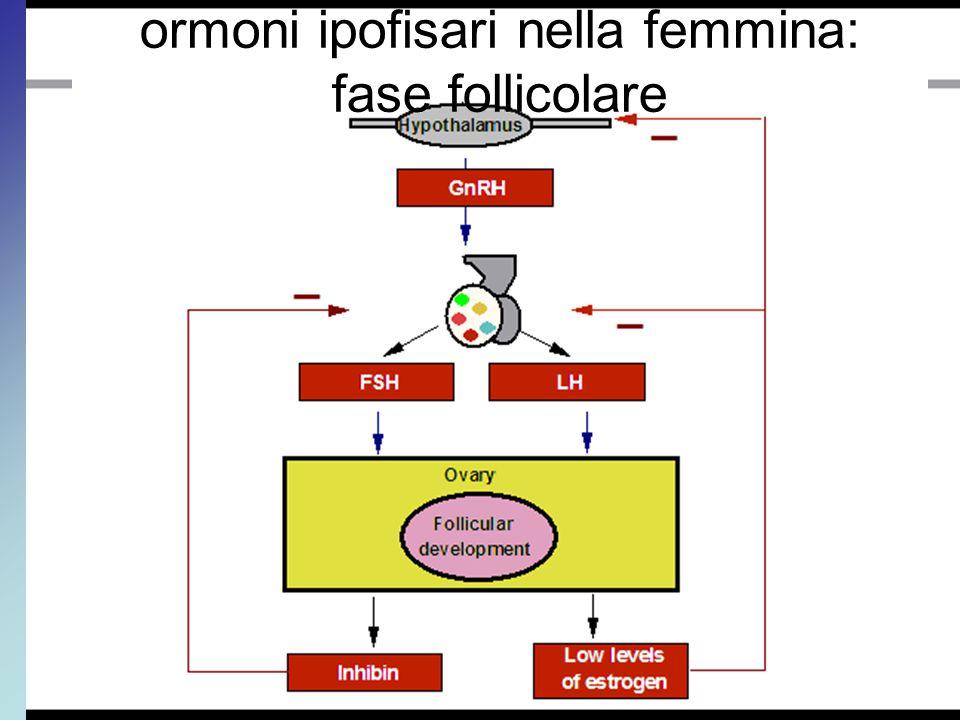 ormoni ipofisari nella femmina: fase follicolare