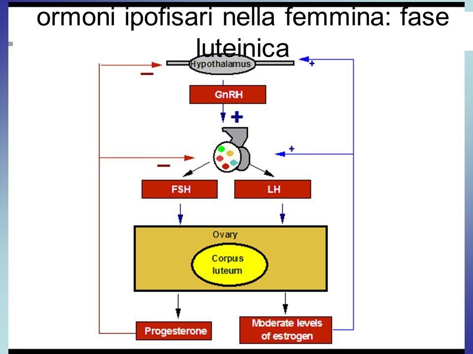 ormoni ipofisari nella femmina: fase luteinica