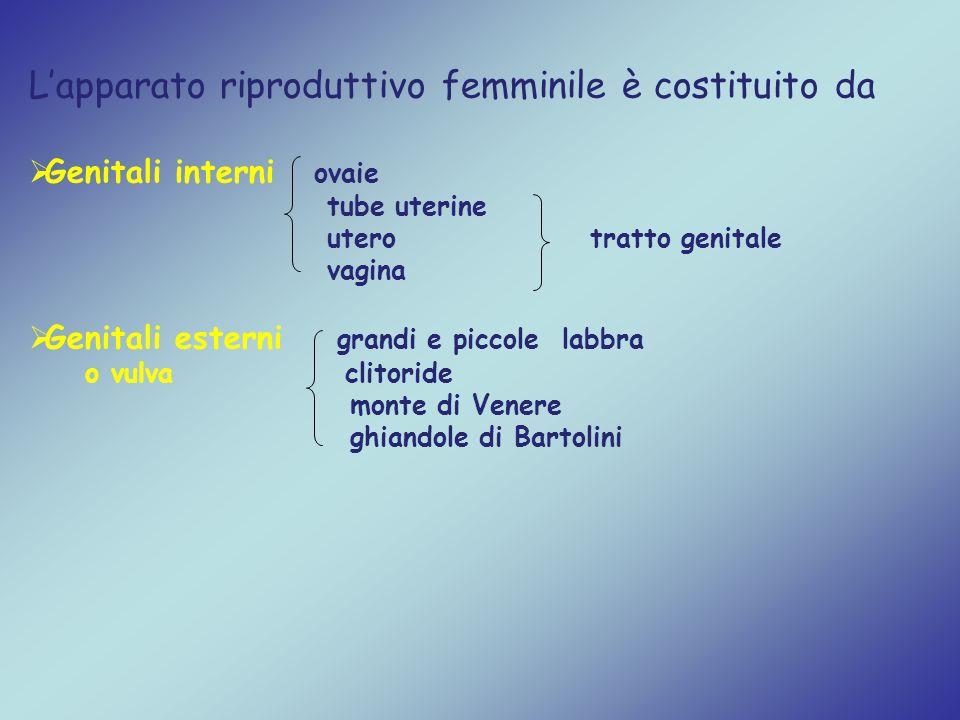 L'apparato riproduttivo femminile è costituito da  Genitali interni ovaie tube uterine utero tratto genitale vagina  Genitali esterni grandi e picco