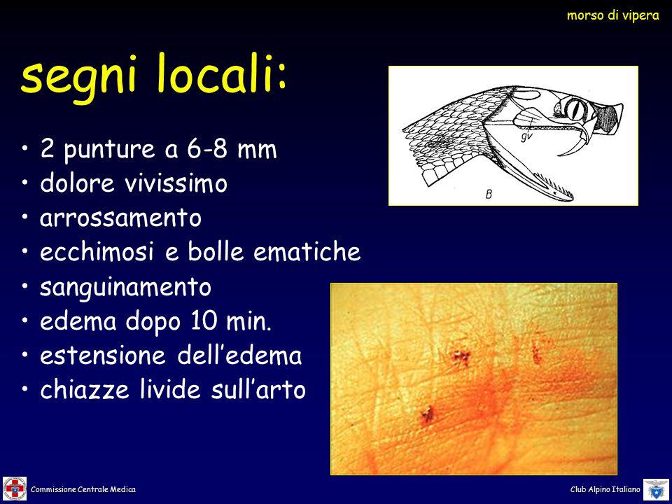 Commissione Centrale Medica Club Alpino Italiano segni locali: 2 punture a 6-8 mm dolore vivissimo arrossamento ecchimosi e bolle ematiche sanguinamento edema dopo 10 min.
