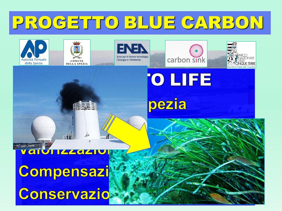 PROGETTO BLUE CARBON