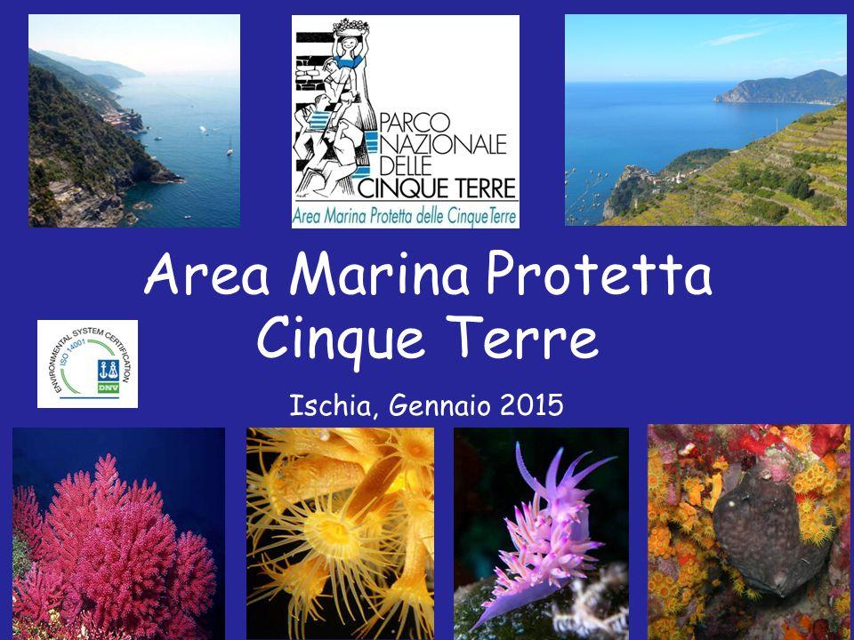 Area Marina Protetta Cinque Terre Ischia, Gennaio 2015