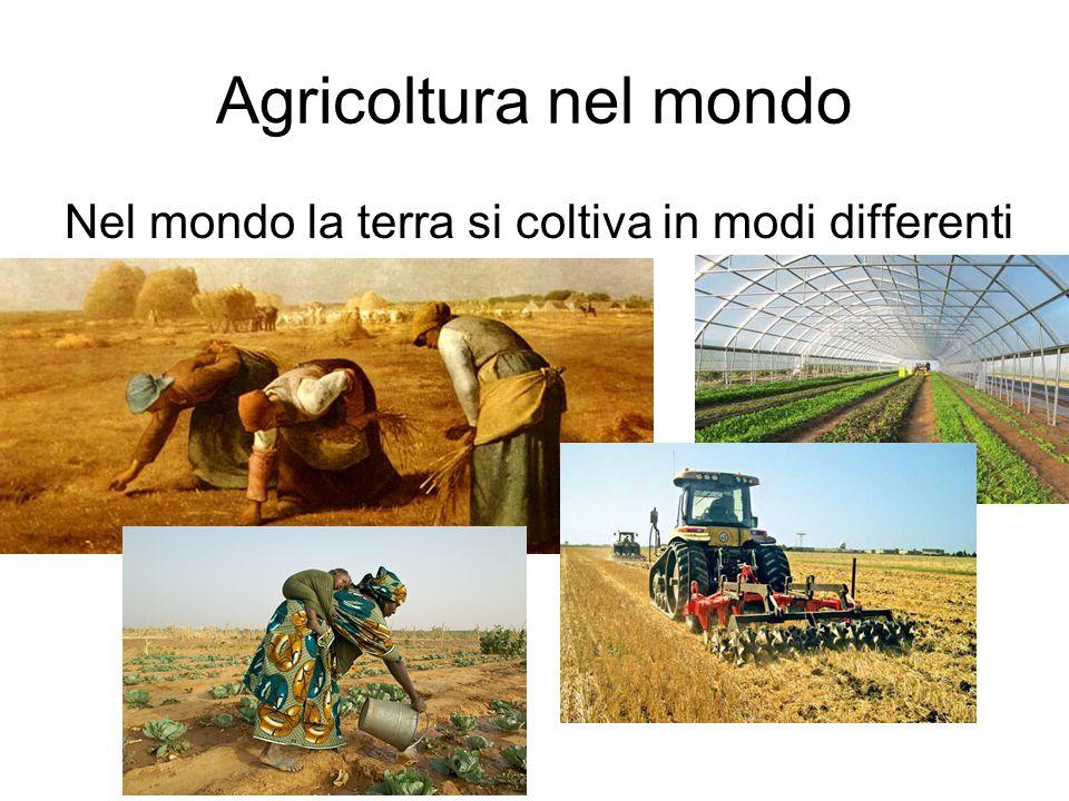 Agricoltura nel mondo Nel mondo la terra si coltiva in modi differenti