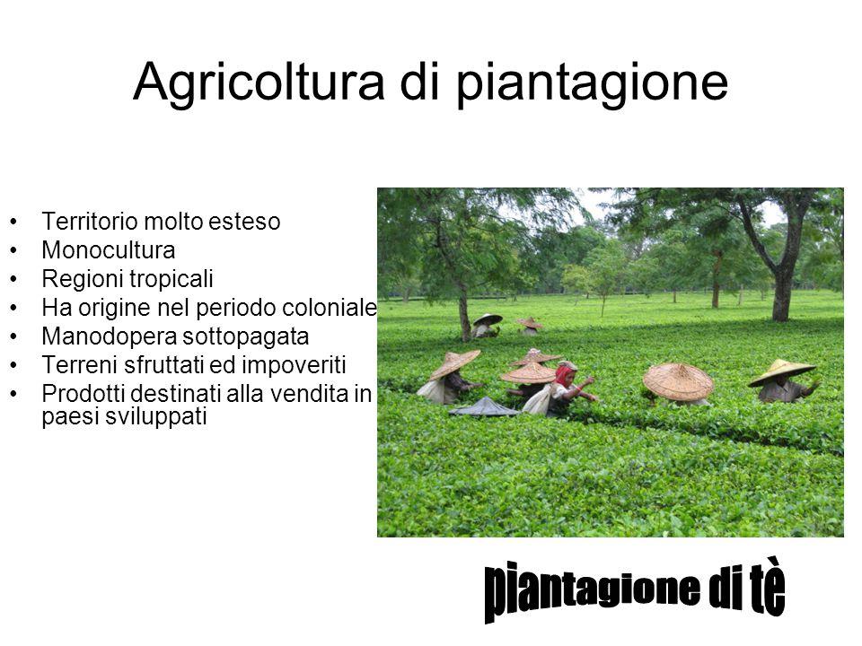 Agricoltura di piantagione Territorio molto esteso Monocultura Regioni tropicali Ha origine nel periodo coloniale Manodopera sottopagata Terreni sfrut